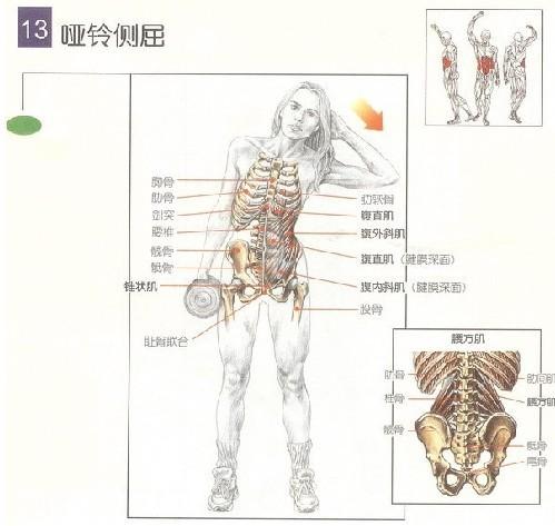 腹部锻炼 - 哑铃健身入门教程